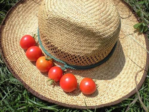 休息はトマトで