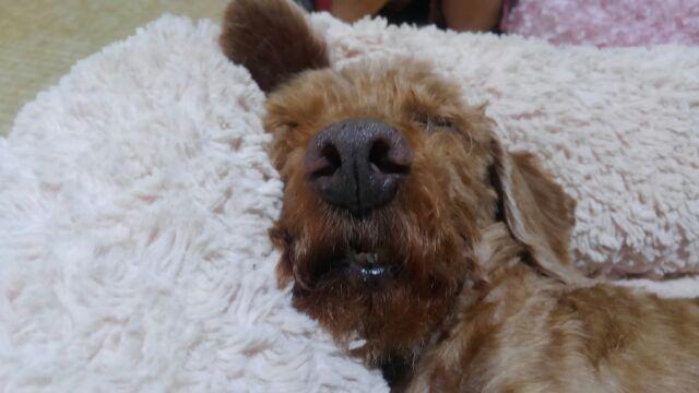 眠い 眠い