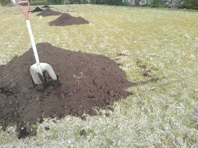 里芋始めは堆肥
