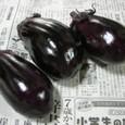 ナス サラダ紫